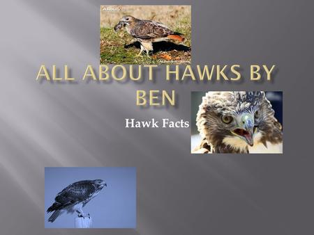 Hawk Facts. M y name is Ben and I am doing a report on Red Tailed Hawks. I think they are neat because they use their wings in many ways.