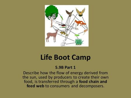 Life Boot Camp 5.9B Part 1 Describe how the flow of energy derived from the sun, used by producers to create their own food, is transferred through a food.