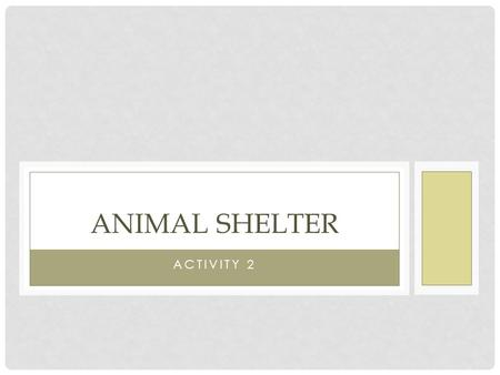 Animal Shelter Activity 2.