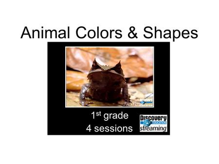 Animal Colors & Shapes 1 st grade 4 sessions. Objectives Understand that animals come in different colors and shapes Describe the purposes of color in.