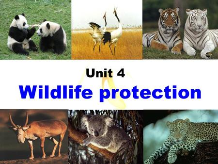 Wildlife protection Unit 4. We call them _______.wildlife Animals or plants live or grow in natural conditions.