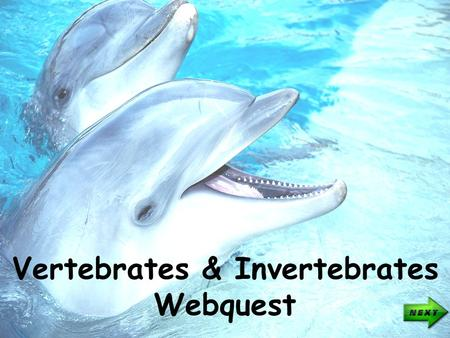 1 opening Vertebrates & Invertebrates Webquest. Directions Click to move to the next slide. Click to move to the previous slide. Directions.