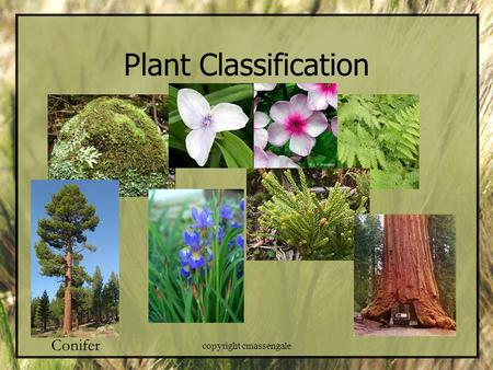 Plant Classification copyright cmassengale. Life on Land – Adaptations! Problem Drying Out Making Food Reproduction Gravity & Support Getting water &