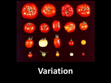 Variation. Types of variation Variation means differences between species (remember dichotomous key) or differences within a species Types of variation:
