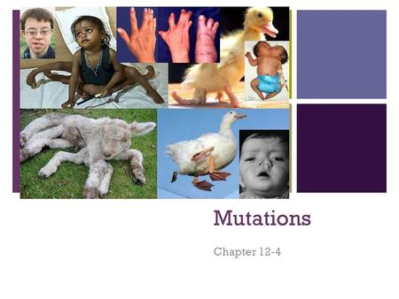 + Mutations Chapter 12-4. + What are mutations? Any change to the genetic code Gene mutations: A change in one or a few nucleotides in a gene Chromosomal.