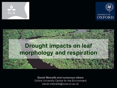 Daniel Metcalfe and numerous others Oxford University Centre for the Environment Drought impacts on leaf morphology and respiration.