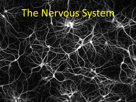 The Nervous System Network of connected cells, tissue, and organs Controls thoughts, movement, life processes Quick responses – Ex: Sunny day  pupils.