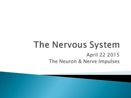 April The Neuron & Nerve Impulses