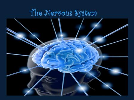 The Nervous System. Functions of the Nervous System Receive Sensory Input Integrate Information (Immediate response, ignore it, store in memory) Control.
