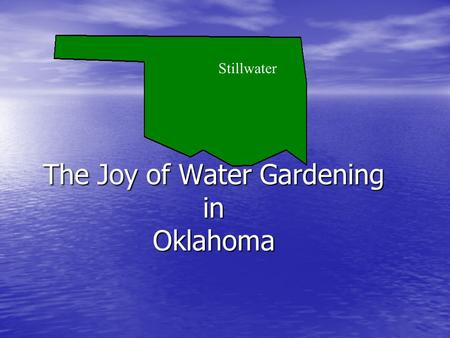 Stillwater The Joy of Water Gardening in Oklahoma.