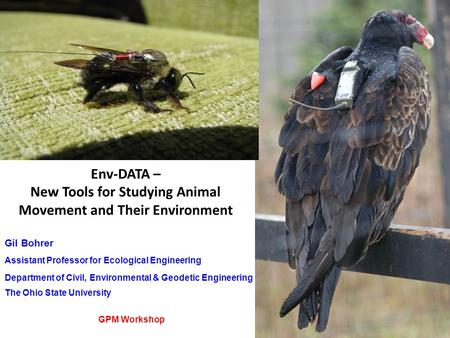 Env-DATA – New Tools for Studying Animal Movement and Their Environment Gil Bohrer Assistant Professor for Ecological Engineering Department of Civil,