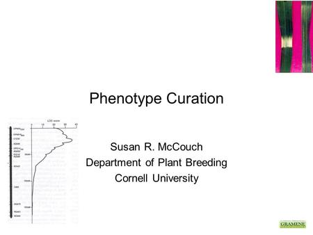 Phenotype Curation Susan R. McCouch Department of Plant Breeding Cornell University.