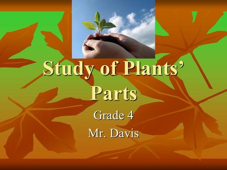 Study of Plants' Parts Grade 4 Mr. Davis Parts The seeds The seeds The roots The roots The stems The stems The leaves The leaves The flowers The flowers.