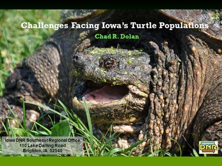 Challenges Facing Iowa's Turtle Populations Chad R. Dolan Iowa DNR Southeast Regional Office 110 Lake Darling Road Brighton, IA 52540.