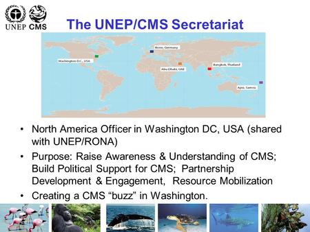 The UNEP/CMS Secretariat North America Officer in Washington DC, USA (shared with UNEP/RONA) Purpose: Raise Awareness & Understanding of CMS; Build Political.