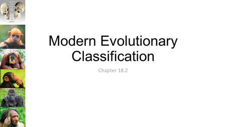 Modern Evolutionary Classification Chapter 18.2. The Problem with the Linnaeus System Linnaeus classified organisms based on overall similarities and.
