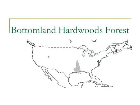 "Bottomland Hardwoods Forest. Baldcypress (Taxodium distichum) Characteristics  Height: 100-120'  Diameter: 3-5'  Needles: deciduous,.4-.75"" long, single."
