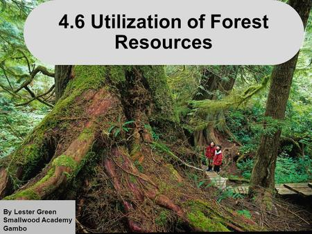 1 4.6 Utilization of Forest Resources By Lester Green Smallwood Academy Gambo.