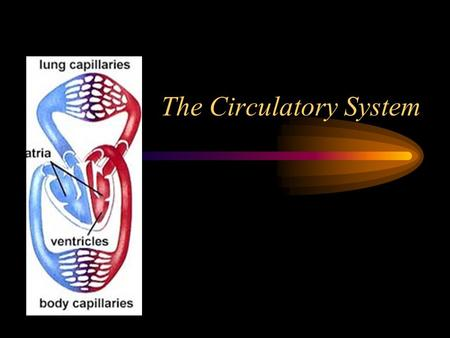 The Circulatory System. Vertebrates have Closed circulatory systems A system that uses a continuous series of vessels of different sizes to deliver blood.