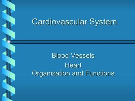 Cardiovascular System Blood Vessels Heart Organization and Functions.