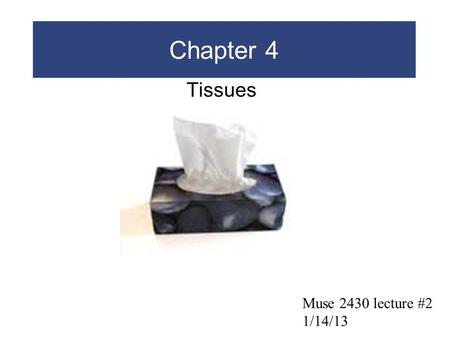 Chapter 4 Tissues Muse 2430 lecture #2 1/14/13.