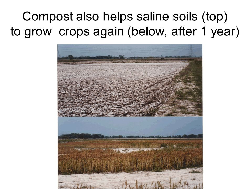OLD OPEN DUMPS MUST BE IMPROVED For small scattered heaps, make them convex to prevent rainwater pools on top and percolation, forming leachate.