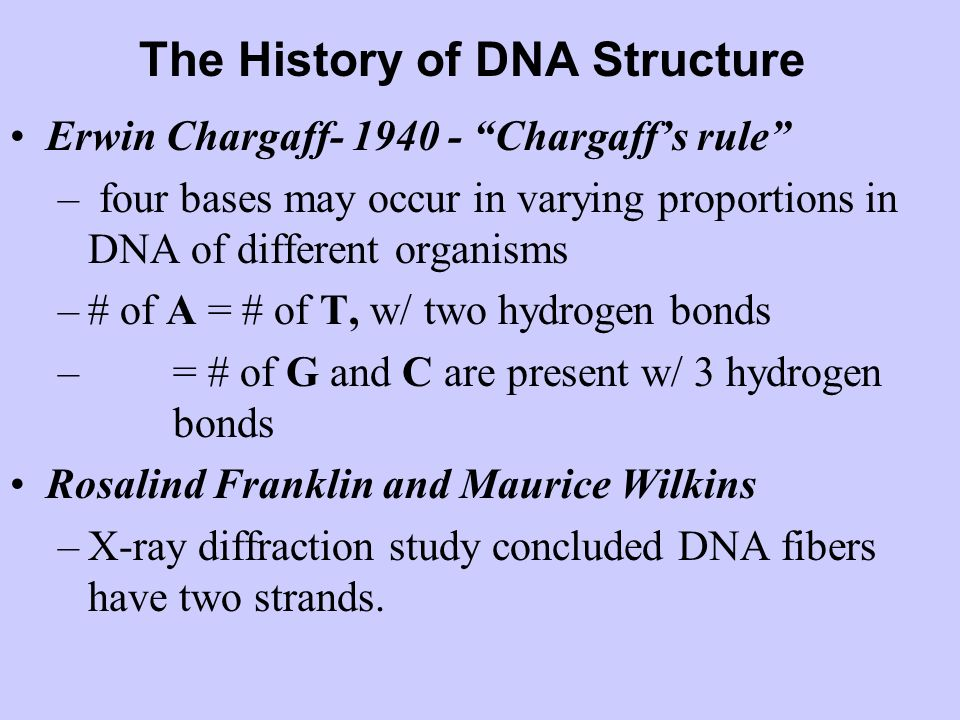 The History of DNA Structure Erwin Chargaff- 1940 - Chargaffs rule – four bases may occur in varying proportions in DNA of different organisms –# of A = # of T, w/ two hydrogen bonds – = # of G and C are present w/ 3 hydrogen bonds Rosalind Franklin and Maurice Wilkins –X-ray diffraction study concluded DNA fibers have two strands.