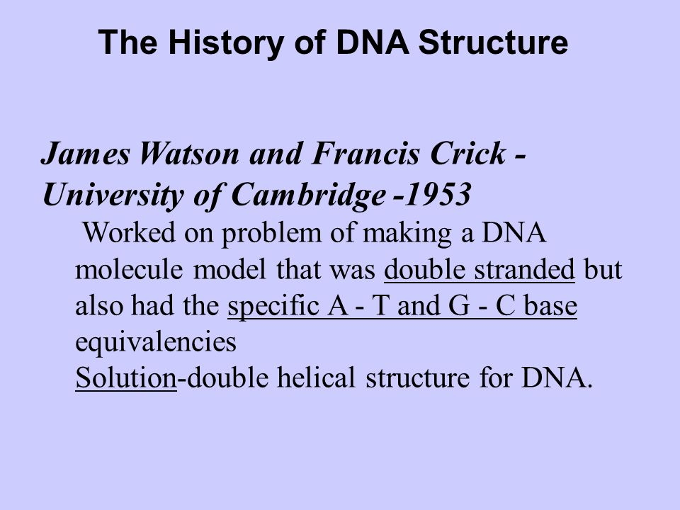 The History of DNA Structure James Watson and Francis Crick - University of Cambridge -1953 Worked on problem of making a DNA molecule model that was double stranded but also had the specific A - T and G - C base equivalencies Solution-double helical structure for DNA.