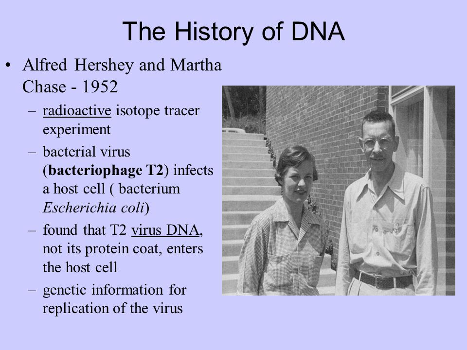 The History of DNA Alfred Hershey and Martha Chase - 1952 –radioactive isotope tracer experiment –bacterial virus (bacteriophage T2) infects a host cell ( bacterium Escherichia coli) –found that T2 virus DNA, not its protein coat, enters the host cell –genetic information for replication of the virus