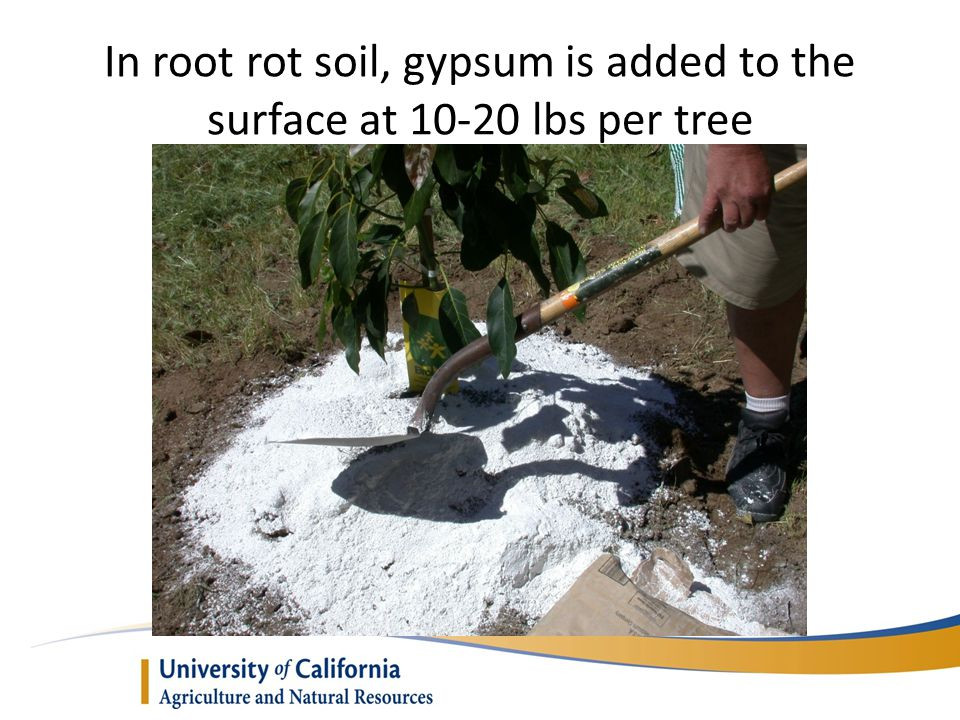 The planting is finished with a top-dressing of wood chips or bark