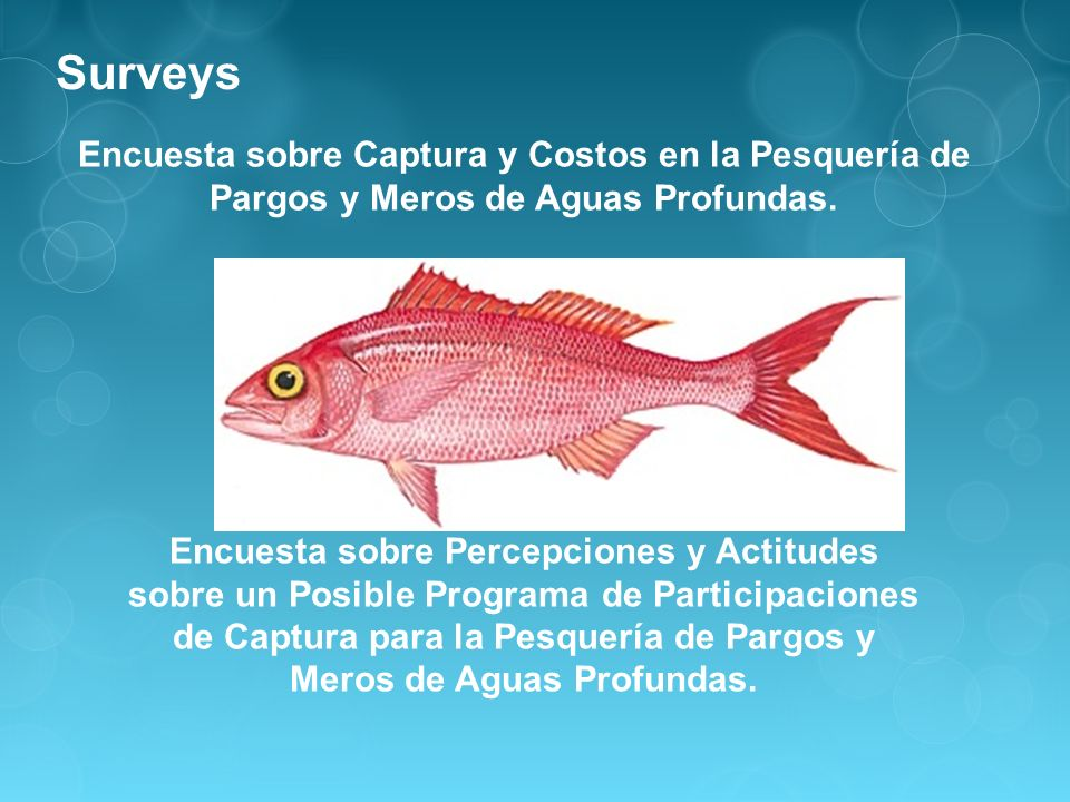Content of Surveys * Landings and trip costs in the Deep-water Snapper- Grouper Fishery -Demographic Information -Historical Landings (2007-2010) -Trip Costs *Attitudes and Preferences about the Potential Use of Catch Shares in the DWS Fishery -Knowledge & Perceptions about the CS Program (advantages & disadvantages) -How to implement the CS Program (monitoring and enforcement) -How quotas should be distributed, whom should receive the quotas, leasing/selling quotas, new entrant fund, etc.