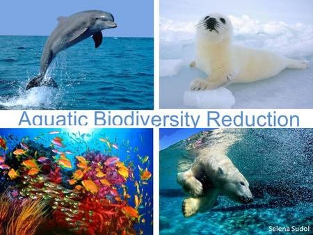 Aquatic Biodiversity Reduction Selena Sudol. Marine Biodiversity is, plain and simple, the diversity of organisms in marine environments. It is the variety.