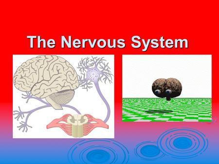The Nervous System. Essential Question  How does the nervous system promote homeostasis in the body.