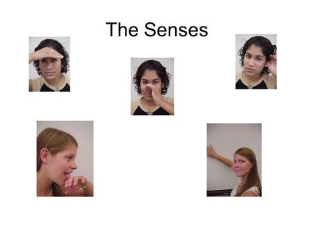 The Senses. Vision Pupil: the opening in the iris that regulates the amount of light Lens: the flexible and transparent part of the eye that changes its.