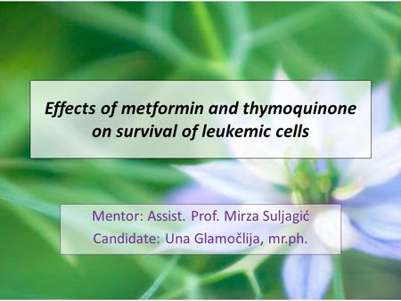 Effects of metformin and thymoquinone on survival of leukemic cells Mentor: Assist. Prof. Mirza Suljagić Candidate: Una Glamočlija, mr.ph.