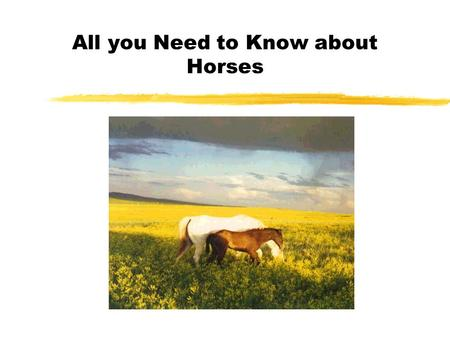 All you Need to Know about Horses. Overview zBreeds zColors zMarkings zParts of the Horse zHorse Terms zGeneral Care zHealth Concerns.