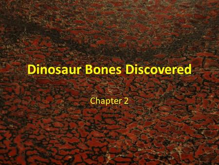 Dinosaur Bones Discovered Chapter 2.