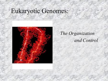 Eukaryotic Genomes: The Organization and Control.