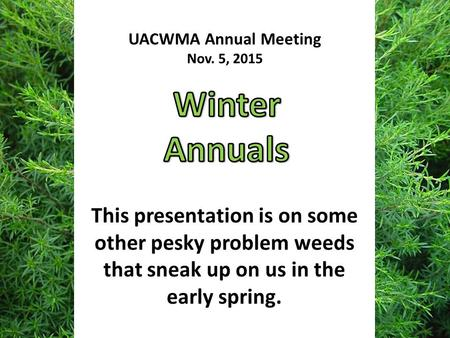 This presentation is on some other pesky problem weeds that sneak up on us in the early spring. UACWMA Annual Meeting Nov. 5, 2015.