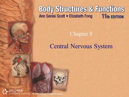 © 2009 Delmar, Cengage Learning Chapter 8 Central Nervous System.