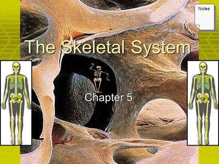 The Skeletal System Chapter 5 Notes.  Composed bones, ligaments, tendons, and cartilages. 1.Support  bones of the legs, pelvic girdle, and vertebral.