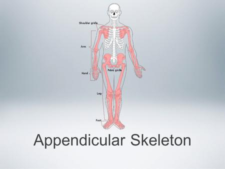 Appendicular Skeleton. Your appendicular skeleton includes all of the bones and joints that make up your appendages This includes the shoulder girdles.