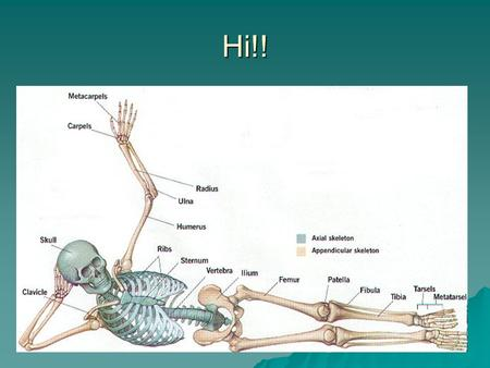 Hi!!. Vertebral Column General Characteristics  1. Consists of 26 irregular bones  2. A curved structure that extends from the skull to the pelvic.
