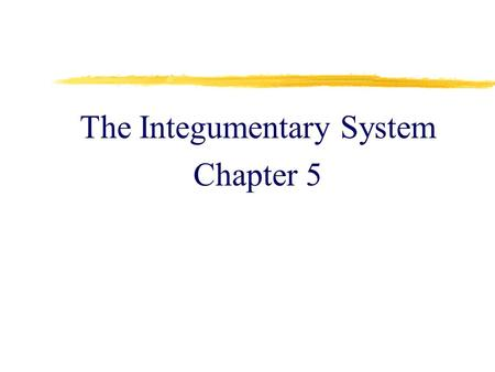 The Integumentary System Chapter 5. The Skin  epithelial and connective tissues working together  the largest organ of the body  1.5 - 2 square meters.
