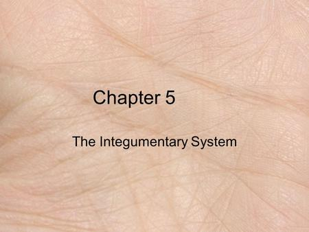 Chapter 5 The Integumentary System. Functions of Skin protection prevention of water loss temperature regulation metabolic regulation immune defense sensory.