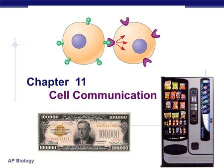 "AP Biology Chapter 11 Cell Communication. AP Biology The Cellular ""Internet""  Within multicellular organisms, cells must communicate with one another."