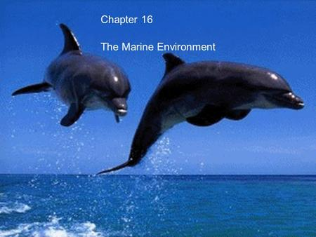 Chapter 16 The Marine Environment. Longshore currents Waves usually approach the beach at an angle Water recedes parallel to the beach. Waves usually.