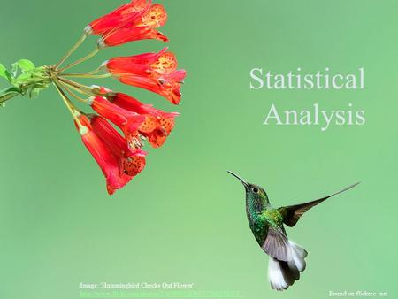 Statistical Analysis Image: 'Hummingbird Checks Out Flower'