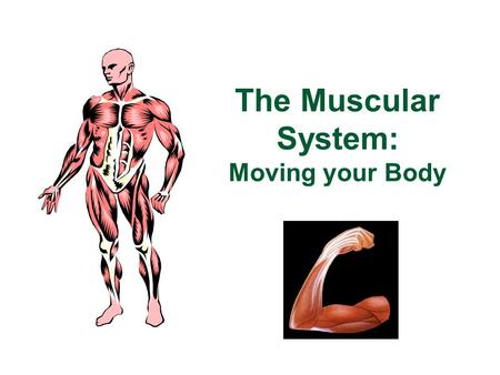 The Muscular System: Moving your Body So, which systems have we learned about so far? Which systems will we learn about next?