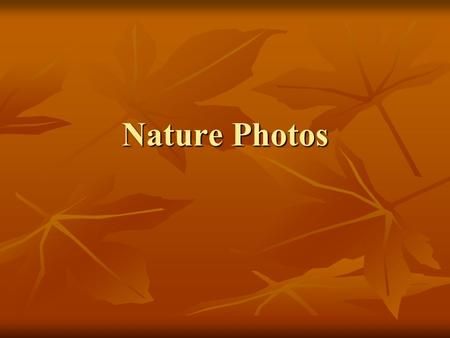 Nature Photos. Landscape Examples.